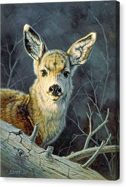 Fawns Canvas Print - Fleeting Visit- Fawn by Paul Krapf