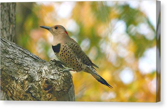 Flicker Canvas Print by Debbie Sikes