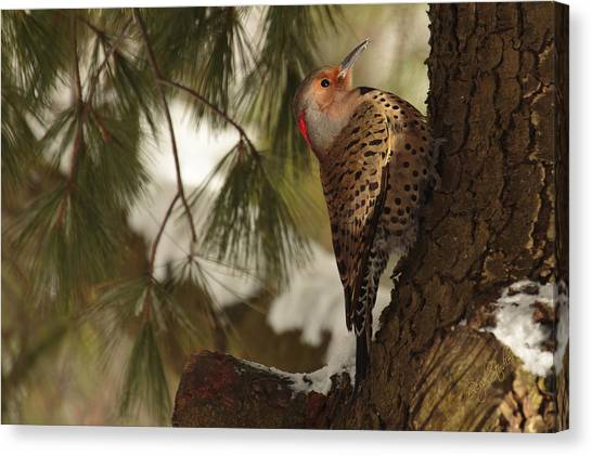 Woodpeckers Canvas Print - Flicker by Everet Regal