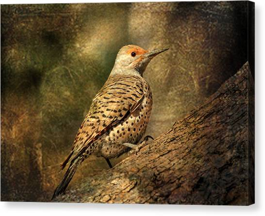 Northern Flicker Canvas Print - Flicker In A Tree by Donna Kennedy