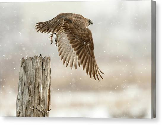 Falcons Canvas Print - Flight Against The Snowstorm by Osamu Asami
