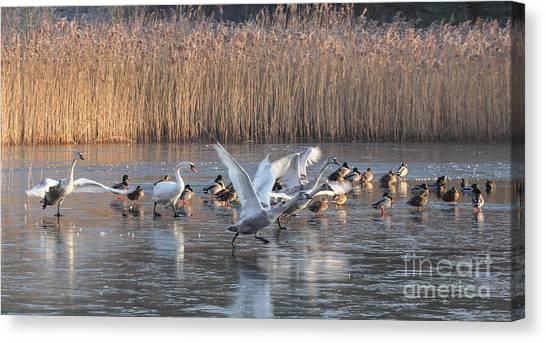 Flight From Ice Canvas Print