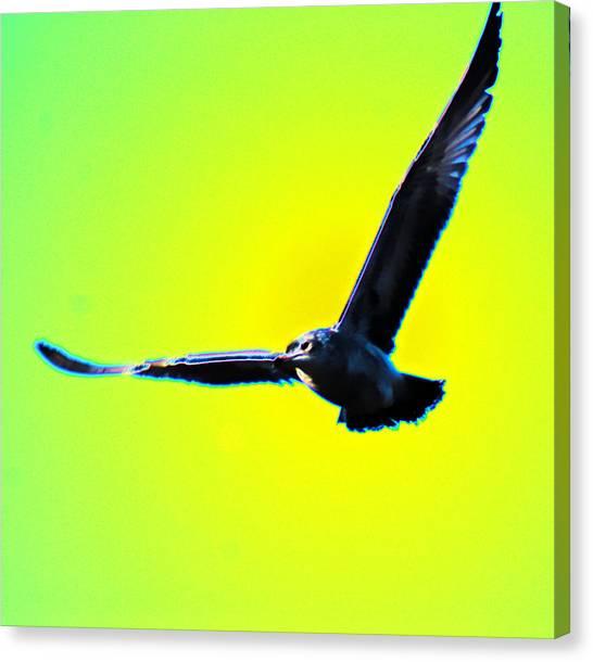 Flight Canvas Print by Joe Bledsoe