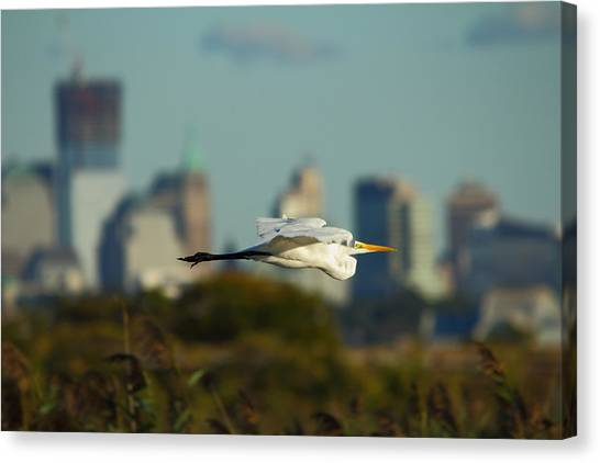 Flight Of The Great Egret Canvas Print