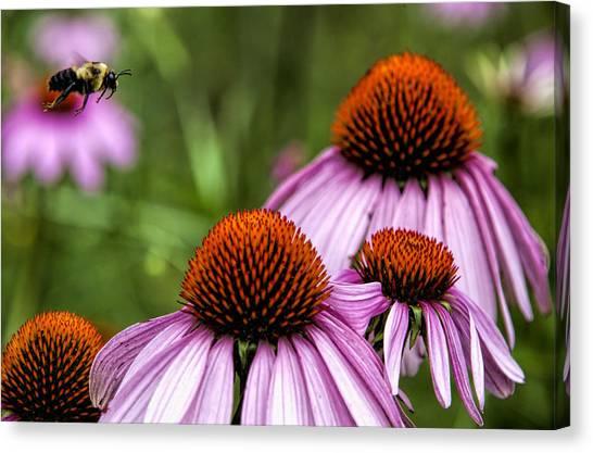 Flight Of The Honey Bee Canvas Print