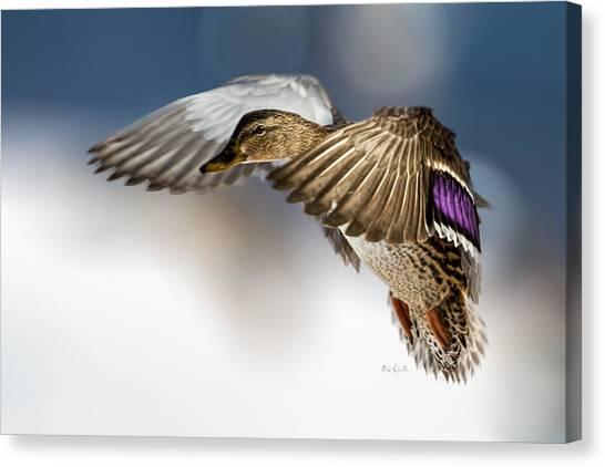 Flight Of The Mallard Canvas Print
