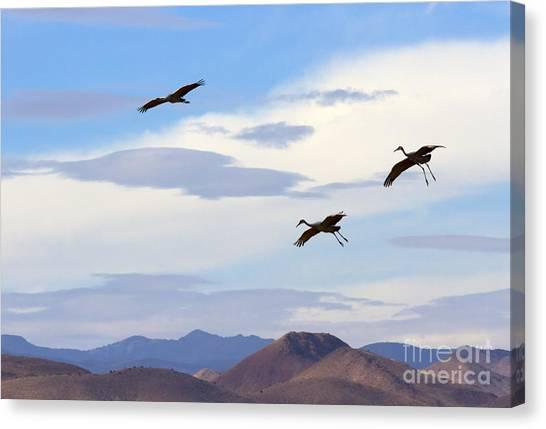 Sandhill Crane Canvas Print - Flight Of The Sandhill Cranes by Mike  Dawson