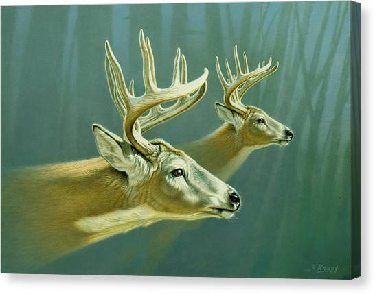 Deer Canvas Print - Flight by Paul Krapf