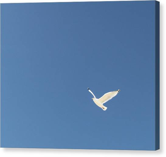 Flight Canvas Print