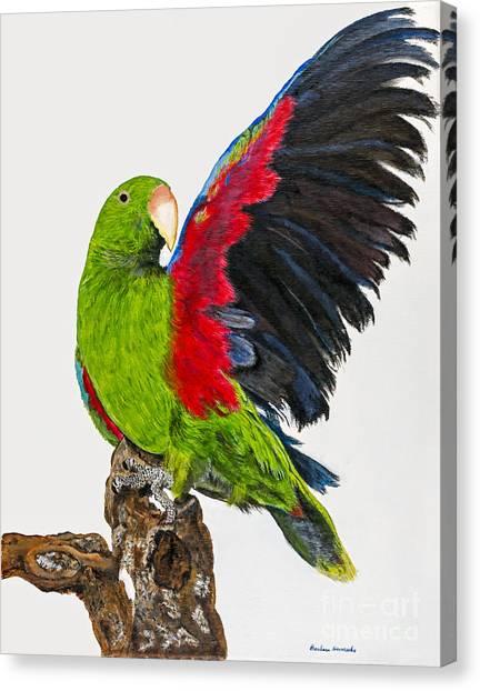 Flirting Parrot By Barbara Heinrichs Canvas Print by Sheldon Kralstein