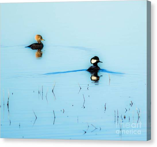 Floating And Glowing Canvas Print by Ursula Lawrence