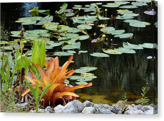 Floating Lily Pond Canvas Print