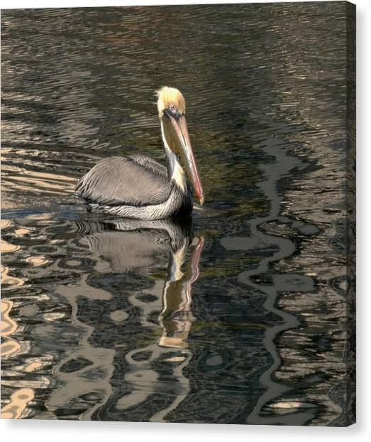 Floating Pelican Canvas Print