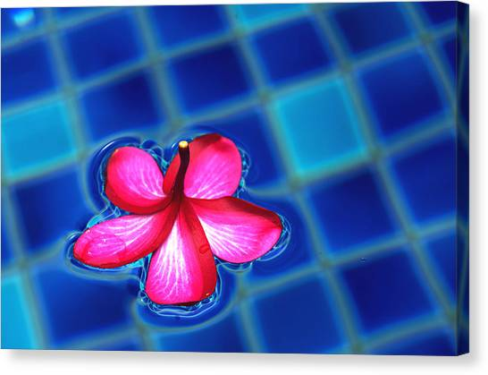 Floating Petal Canvas Print