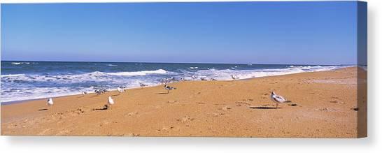 Flagler Beach Canvas Print - Flock Of Birds On The Beach, Flagler by Animal Images