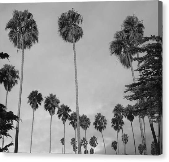 Flock Of Palm Trees Canvas Print