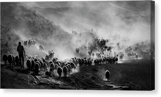 Dust Canvas Print - Flocks by ?mm? Nisan