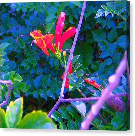 Floral 5 Canvas Print by Dan Twyman