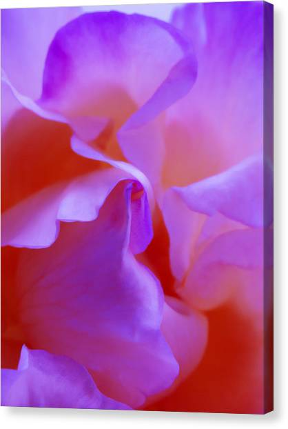 Abstract Red White Orange Pink Flowers Art Work Photography Canvas Print