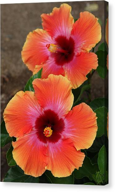 Floral Beauty 2  Canvas Print