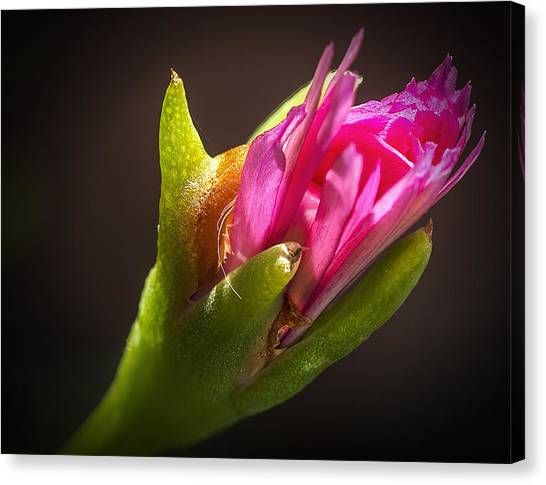Floral Glove Canvas Print