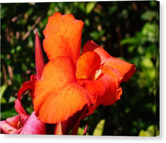 Floral Orange Canvas Print by Van Ness