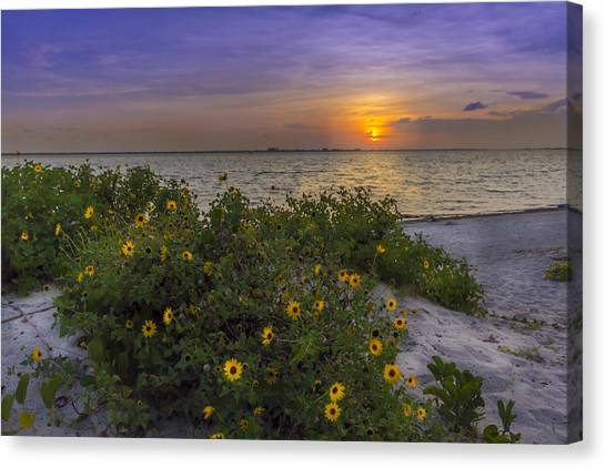 Mangrove Trees Canvas Print - Floral Shore by Marvin Spates