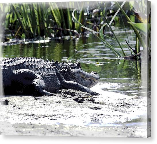 Canvas Print featuring the photograph Florida Alligator On The Sand by William Havle