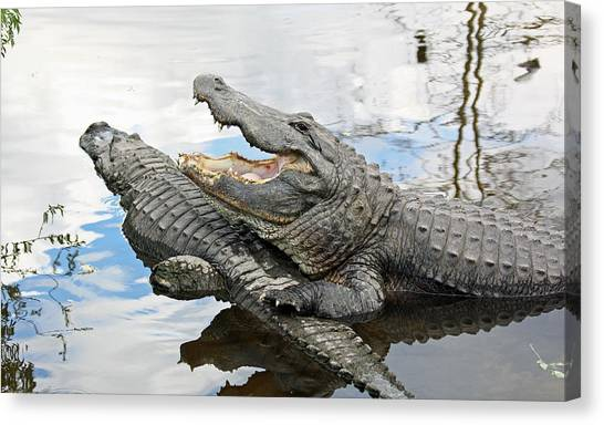Canvas Print featuring the photograph Florida Alligators by Jean Clark