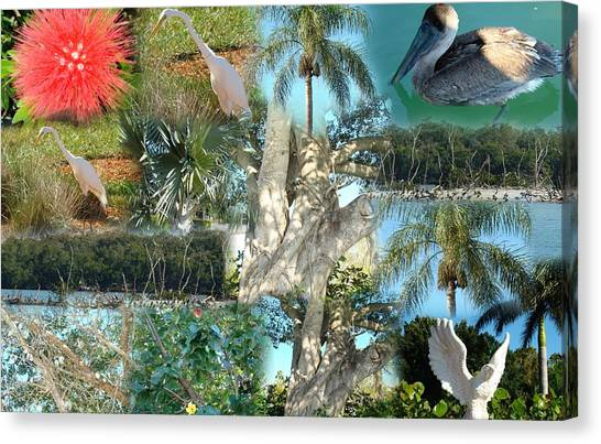 Florida Birds And Trees Canvas Print