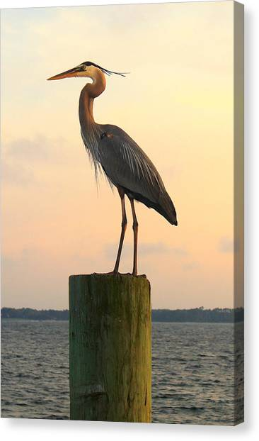 Florida Crane Canvas Print