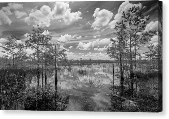 Florida Everglades 5210bw Canvas Print