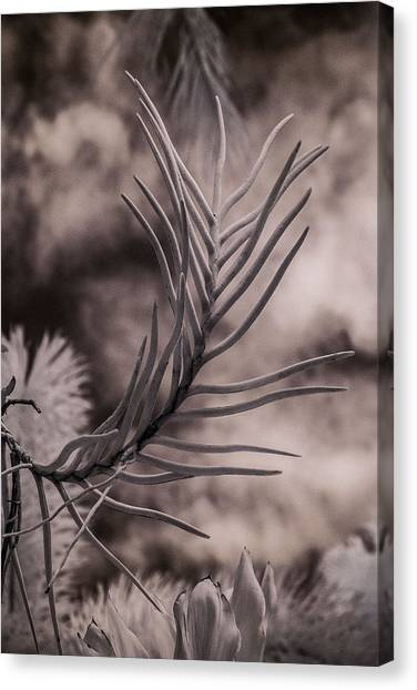 Florida Flora 1 Canvas Print