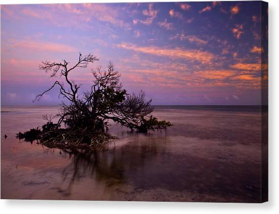 Mangrove Trees Canvas Print - Florida Mangrove Sunset by Mike  Dawson