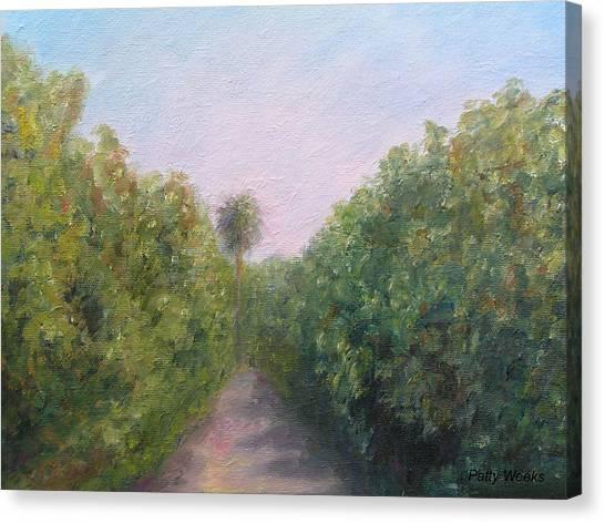 Florida Orange Grove Canvas Print