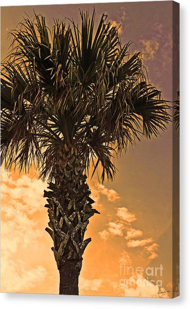 Florida Palm Canvas Print