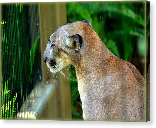 Florida Panthers Canvas Print - Florida Panther by Amanda Vouglas