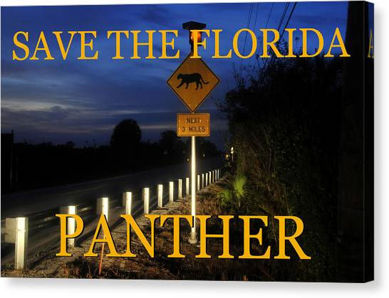 Florida Panthers Canvas Print - Florida Panther Crossing by David Lee Thompson