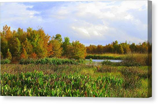Florida Wetlands August Canvas Print