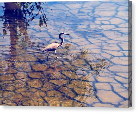 Florida Wetlands Wading Heron Canvas Print