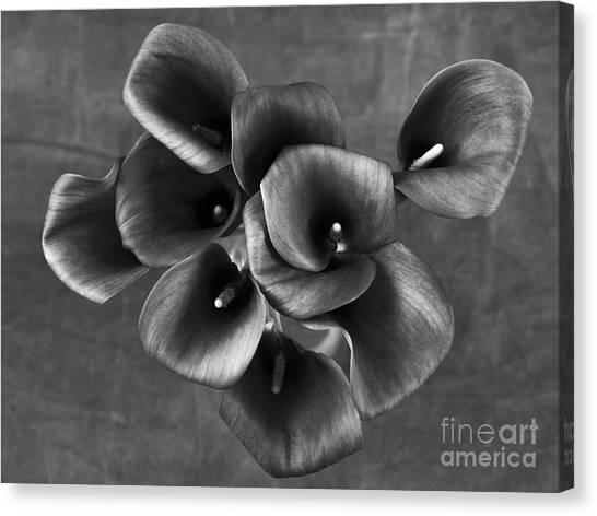 Flower #248 Canvas Print