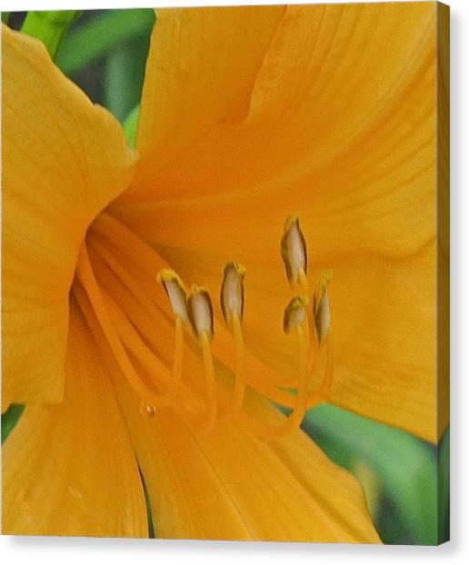Flower 102 Canvas Print by Patsy Pratt