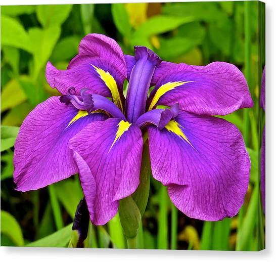 Iris 106 Canvas Print by Patsy Pratt