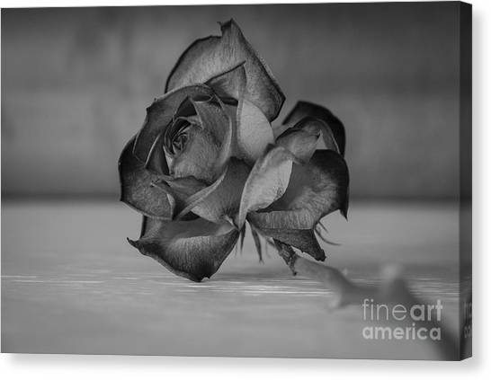 Flower #609 Canvas Print
