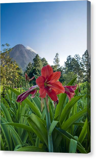 Arenal Volcano Canvas Print - Flower And Arenal by Andy-Kim Moeller