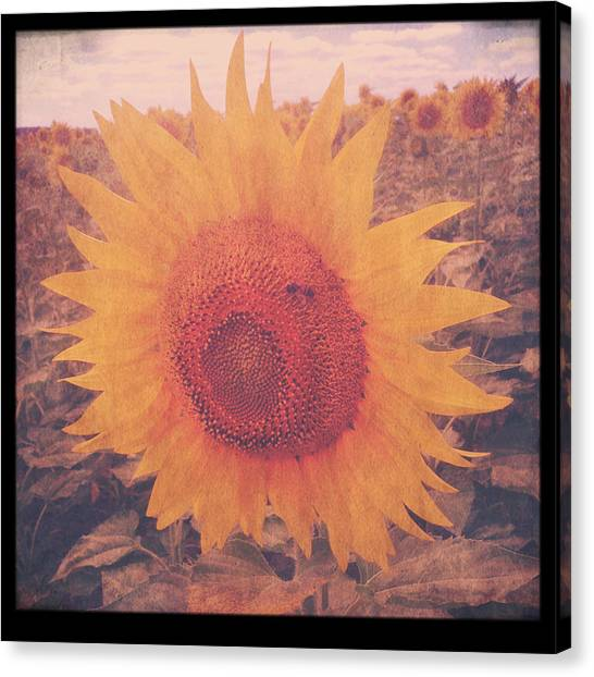 Farmers Canvas Print - Flower And Bee by Candace Fowler
