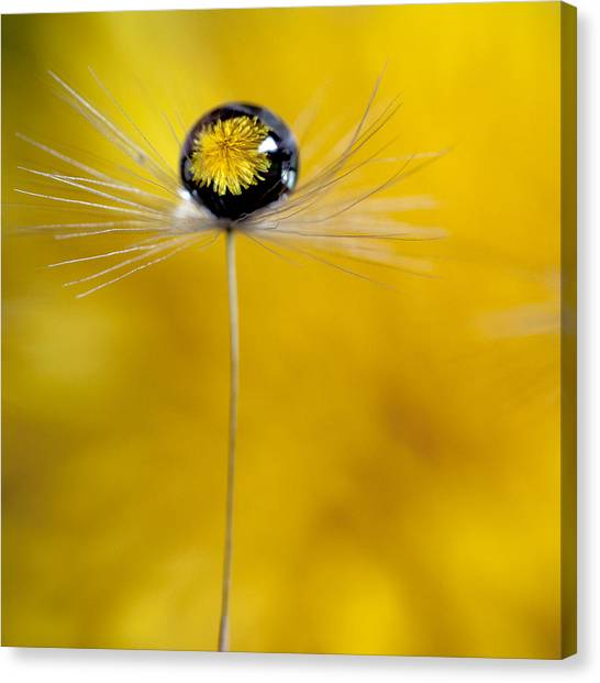 Flower And Seed Canvas Print