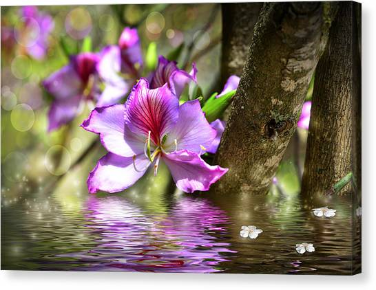 Flower Bauhinia And Simulation Of Water Canvas Print