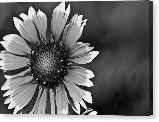 Flower Black And White #1 Canvas Print