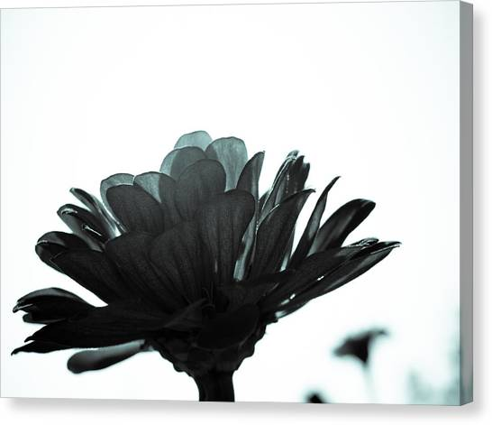 Flower Bloom Canvas Print by Paige Sims